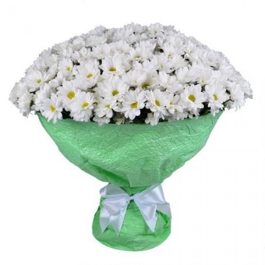 51 белая хризантема