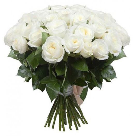 51 белая садовая роза «David Austin»