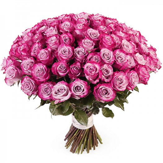 101 черничная роза