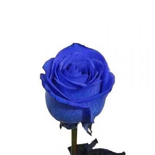 Роза blue vendela
